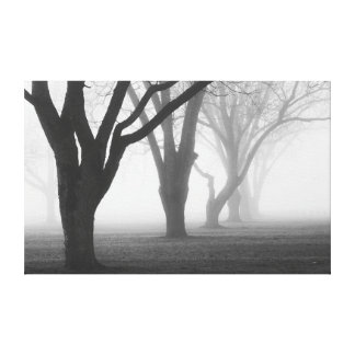 Trees In A Fog Landscape Canvas Print