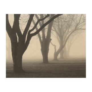 Trees In A Fog Landscape Wood Print