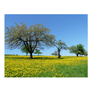 trees in a meadow postcard