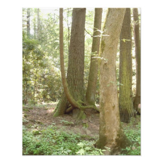 Trees in an Awkward Position Art Photo
