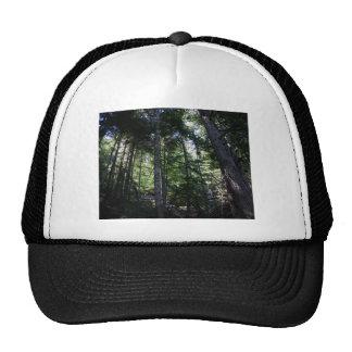 Trees in Mt Rainier National Park Mesh Hat