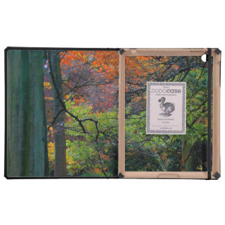 Trees in the Fall iPad Covers