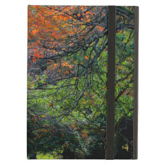 Trees in the Fall iPad Air Case