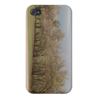 Trees in the Wind Photograph iPhone 4 Cover
