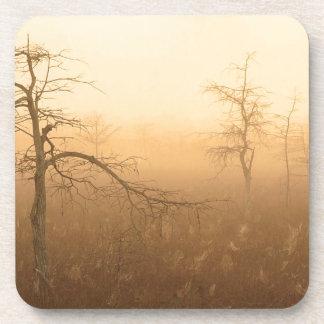 Trees Morning Dew Everglades Florida Coaster