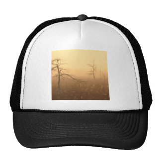 Trees Morning Dew Everglades Florida Hat