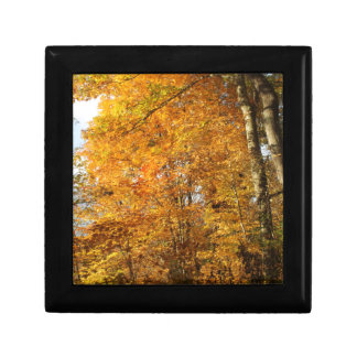 Trees of Fall Gift Box