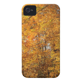Trees of Fall iPhone 4 Covers