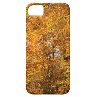 Trees of Fall iPhone 5 Cover