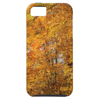 Trees of Fall iPhone 5 Covers