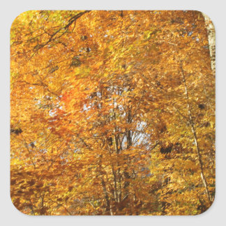 Trees of Fall Square Sticker