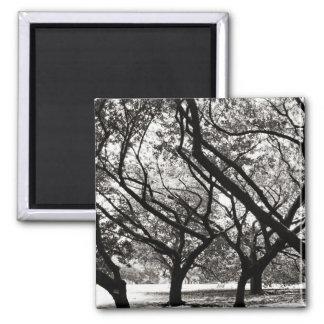 Trees of Harajuku Fridge Magnets