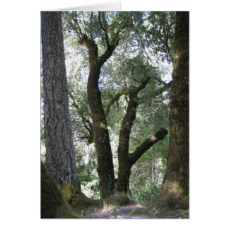 Trees Of Northern California Card