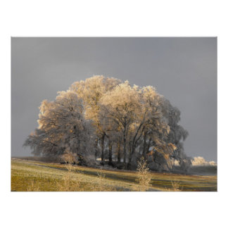 Trees on a frosty morning poster