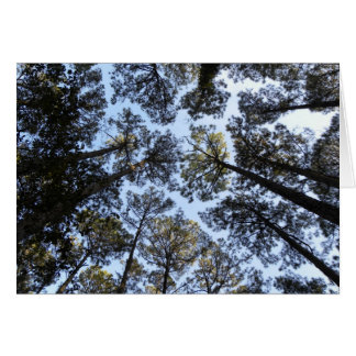 Trees perspective birthday card (h)