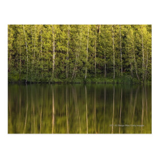 Trees Reflected In The Water Postcard
