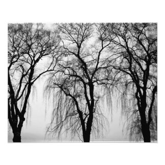 Trees silhouettes in winter photo art