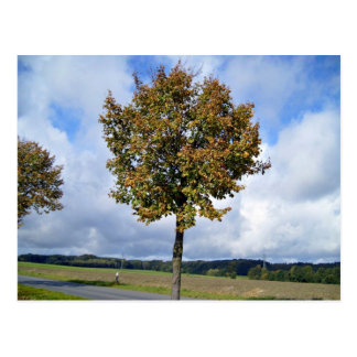 Trees  Under Blue Sky Postcard