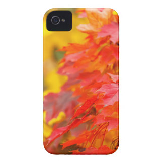 Trees with Orange and Yellow Leaves in the Fall iPhone 4 Cover