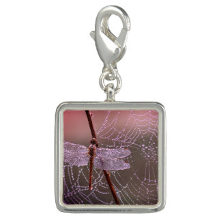 Trendy Photo Charm Bracelet Dragonfly