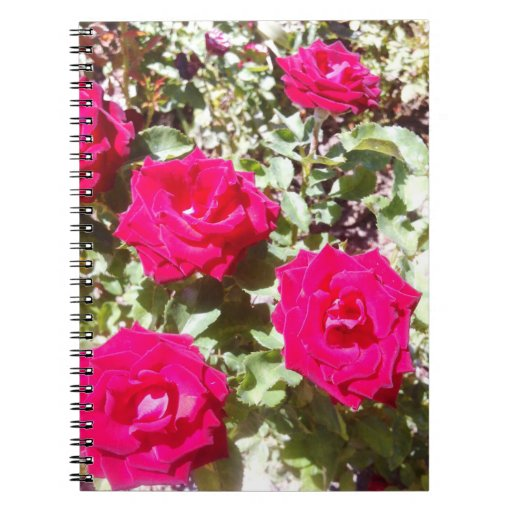 Trendy red roses Photo Notebook (80 Pages B&W)