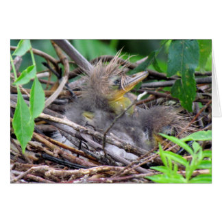 Tri Color Heron Chick Card
