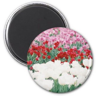 Tri colored 6 cm round magnet