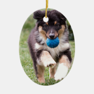 Tri Colored Australian Shepherd Pup Ceramic Ornament