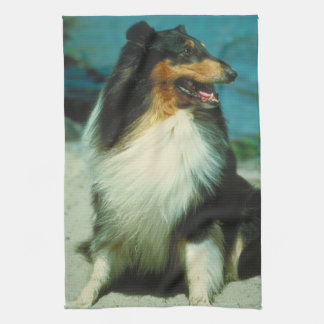 Tri-Colored Collie Dog Kitchen Towel