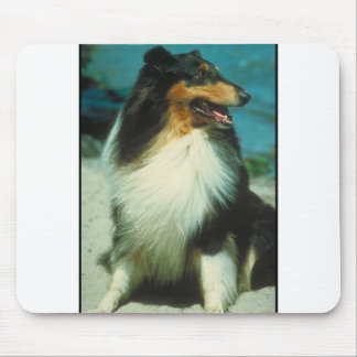 Tri-Colored Collie Rough Coat Mouse Pad