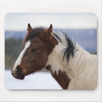 Tri-Colored Horse Mouse Pad