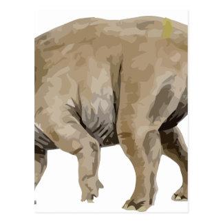 triceratops2 postcard