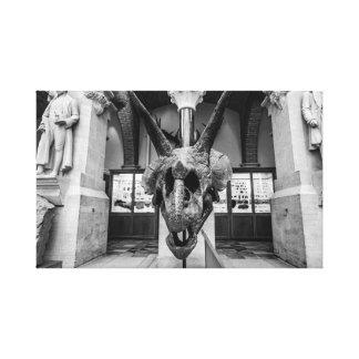 """Triceratops Head"" wall art"