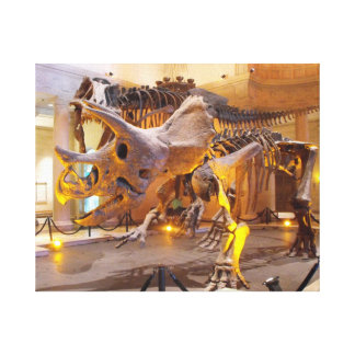 Triceratops Skeleton Canvas Print