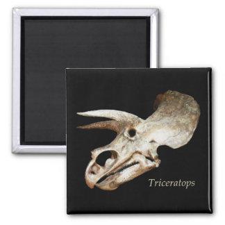Triceratops Skull Magnet