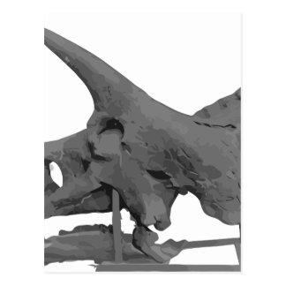 Triceratopsskull Postcard