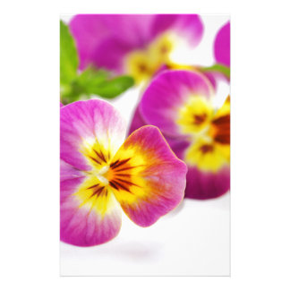 Tricolor | anniversary | flower | Pansy | cute | B