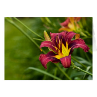 Tricolor Lily Card