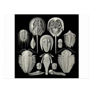 Trilobite! Postcard
