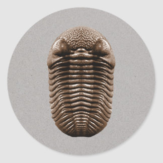 Trilobite Sticker