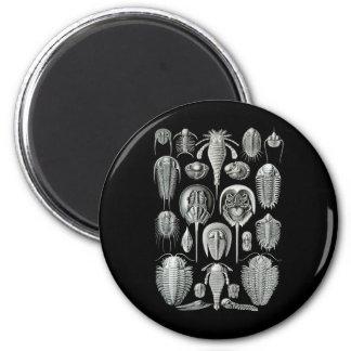Trilobites and Sea Scorpions Magnet