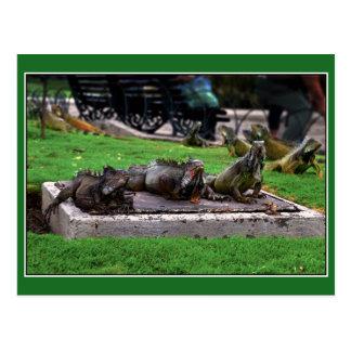 Trio in Iguana Park, Guayaquil, Ecuador Postcard