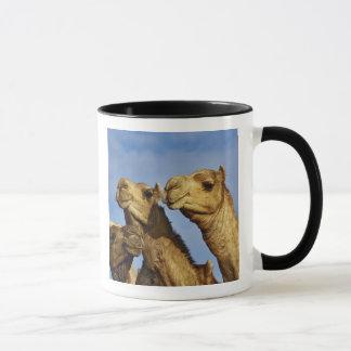 Trio of camels, camel market, Cairo, Egypt Mug