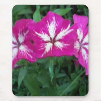 Trio of Hot Pink Phlox Mouse Pad