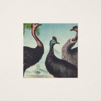 Trio of Ostriches Square Business Card