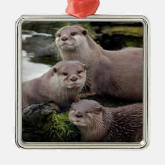 Trio of Otters Silver-Colored Square Decoration
