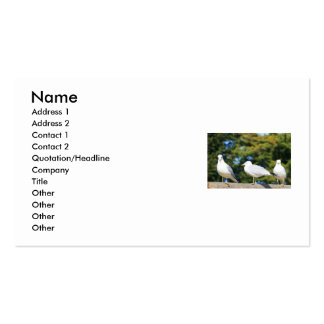 Trio Of Seagulls Business Card