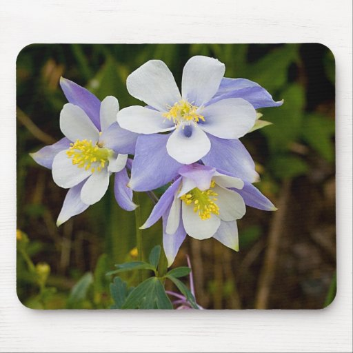 Triplets and New Bloom Mouse Pad