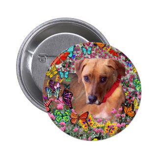 Trista the Rescue Dog in Butterflies Buttons