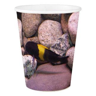 Tropheus party cups